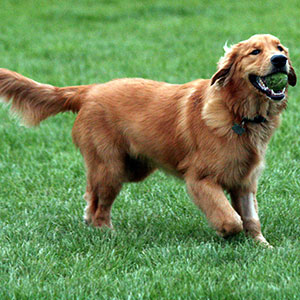 dog-fit