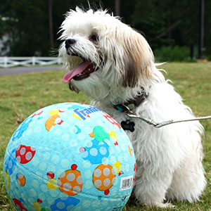 dog-summer