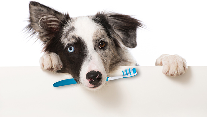 Image result for dental cleaning for pets